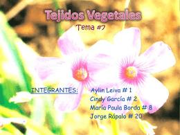 Tejidos Vegetales INTEGRANTES - biologialasalle4-1