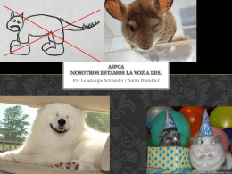 ASPCA - El Portafolio
