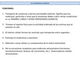 LÍPIDOS - Webnode