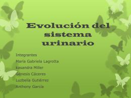 Evolución del sistema urinario