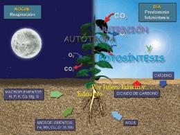 Nutrición Autótrofa y Fotosíntesis