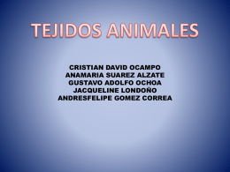 TEJIDOS ANIMALES1.