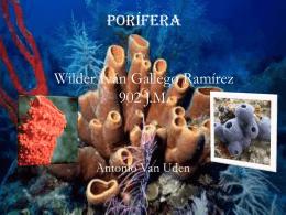 Porifera Wilder Ivan Gallego Ramirez 902 J.M.