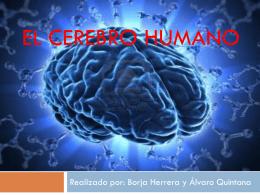 El cerebro humano (1398633)
