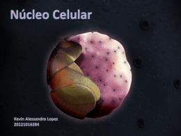 Nucleo - arlenerodriguezunah