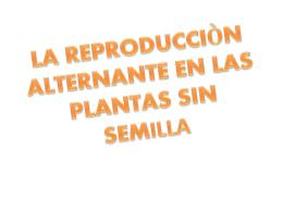 tema 4 punto 3 la reproducciòn alternante en las plantas sin semilla