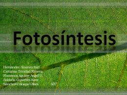 Fotosíntesis - k