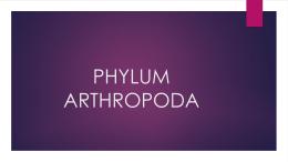 PHYLUM ARTHROPODA (960122)