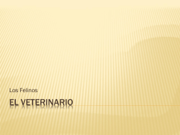 El Veterinario - Eusebia Cordoba