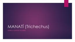 MANATÍ (Trichechus) (1496289)