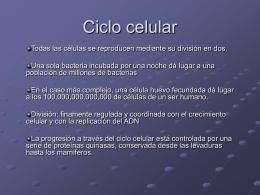 Ciclo celular - Blog del Dr. Daniel Muñoz
