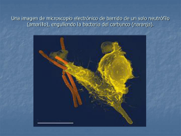 Una imagen de microscopio electrónico de barrido