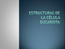 Morfología y estructuras fúngicas