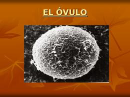 EL ÓVULO