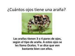 ¿Cuántos ojos tiene una araña?