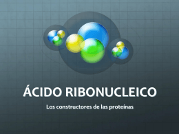ÁCIDO RIBONUCLÉICO