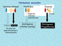 Diapositiva 1 - EPIDEMIOLOGIA Y ANATOMÍA 2 |