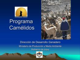 Programa Camélidos - Fundación Empresaria de la