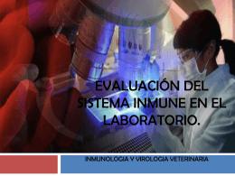Evaluación del sistema inmune en el laboratorio.