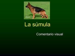 Standard del perro Ovejero Alemán