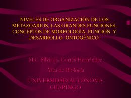NIVELES DE ORGANIZACIÓN DE LOS METAZOARIOS, LAS