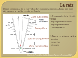 Indicar las zona de la raíz - Morfología Vegetal -