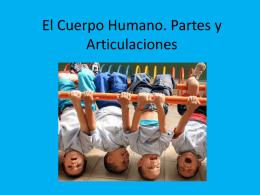 El Cuerpo Humano. Partes y Articulaciones