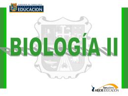 Práctica- Fotosíntesis, clorofila, cloroplastos y