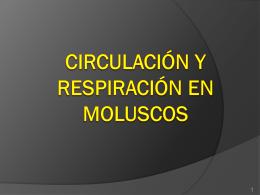Circulación y Respiración en Moluscos