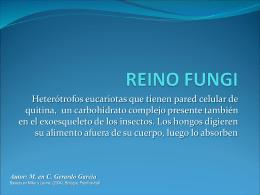 REINO FUNGI - Professor Fláudio