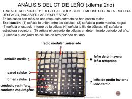 ANÁLISIS DE CT DE LEÑO (xilema 2rio)