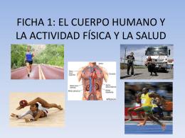 FICHA 1: EL CUERPO HUMANO Y LA ACTIVIDAD FÍSICA Y