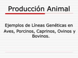 Línea genéticas de aves de carne