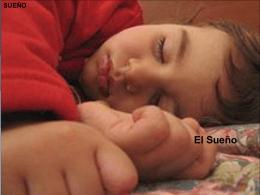 El Sueño Normal. La Ensoñación. Los Procesos