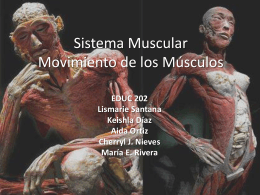 Sistema Muscular Movimiento de los Músculos