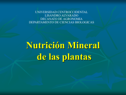 Nutrición Mineral - Mis Clases fisiologia vegetal