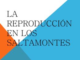 LA REPRODUCCIÓN EN LOS SALTAMONTES