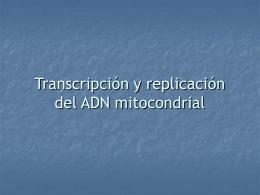 Transcripción y replicación del ADN mitocondrial