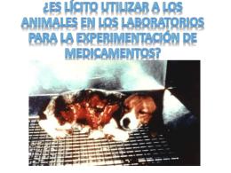 ¿Es lícito utilizar a los animales en los