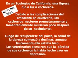 En un Zoológico de California, una tigresa dio a
