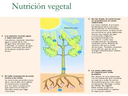 Nutrición vegetal - Ciencias de los alimentos
