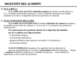 DIGESTIÓN DEL ALMIDÓN