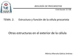 Diapositiva 1 - Biología de Procariotas | Este
