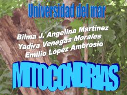 MITOCONDRIAS - Biología Celular