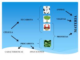 LA POSICIÓN DE LOS MICROORGANISMOS EN LA