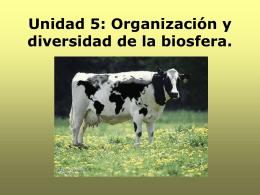 Unidad 5: Organización y diversidad de la