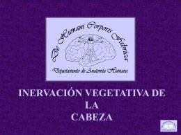 INERVACIÓN VEGETATIVA: CABEZA, APARATO DIGESTIVO Y