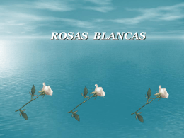 ROSAS BLANCAS - Red Estudiatil .com:.: Fotos de
