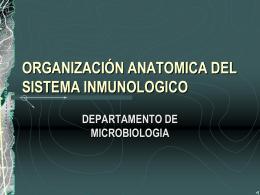 ORGANIZACIÓN ANATOMICA DEL SISTEMA INMUNOLOGICO