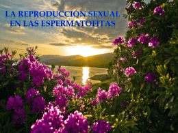 LA REPRODUCCIÓN SEXUAL EN LAS ESPERMATOFITAS